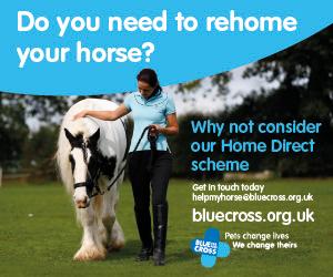 Blue Cross 2020 A (Powys Horse)
