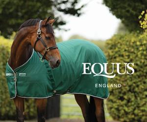 Equus (Powys Horse)